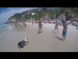 Собакен, который любит футбол (6 sec)