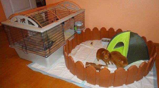 Сделать своими руками домик для морской свинки