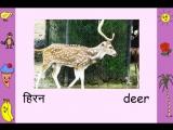 Animals (Hindi)