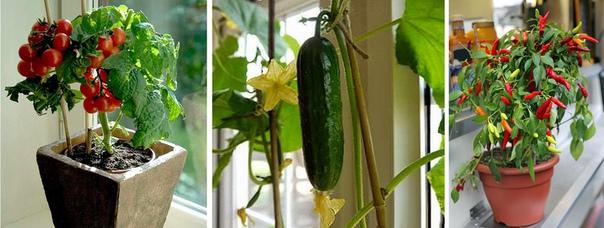 Бизнес-идея: Выращивание овощей в квартире Стартовый капитал от 2 тыс.руб. Прибыль в месяц 50 тыс.руб. Срок окупаемости 1 мес. Приветствую, уважаемые читатели! Сегодня поделюсь с вами