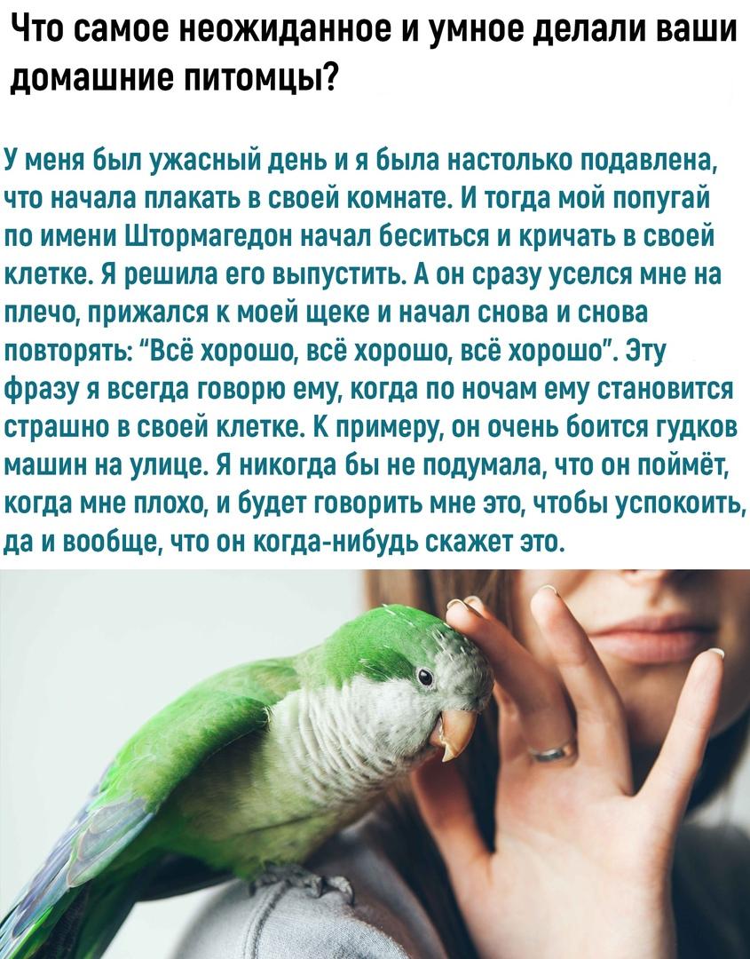 Любите своих домашних питомцев)