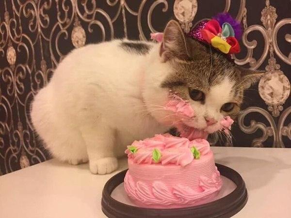 - Да это же торт