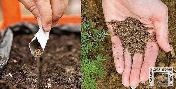 Как сажать морковку без прореживания - 6 способов