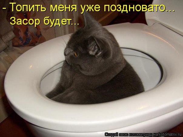 http://cs543101.vk.me/v543101486/bf6f/bo-fYyZjp8E.jpg