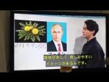 [Я.И.] Путин и одуванчик как примеры стратегии выживания