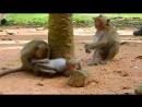Omyg What small monkey doing on Brutus JR Jack rides on Brutus JR