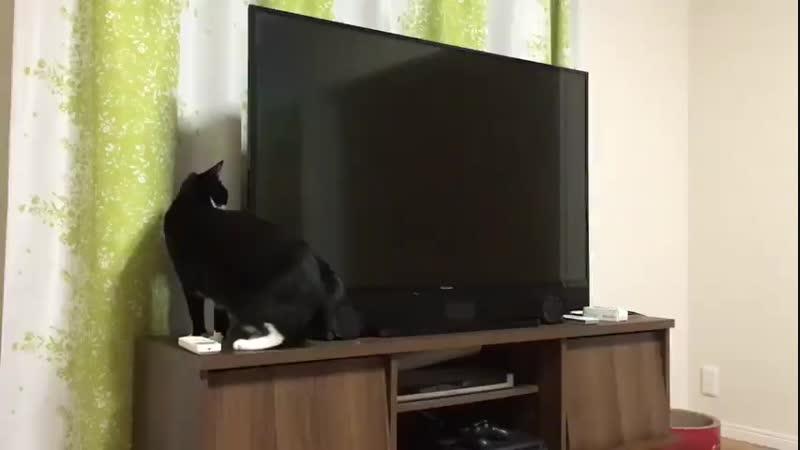 Now thats a long cat.
