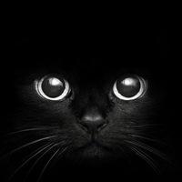 """Оригинал схемы вышивки  """"черная кошка """" ."""