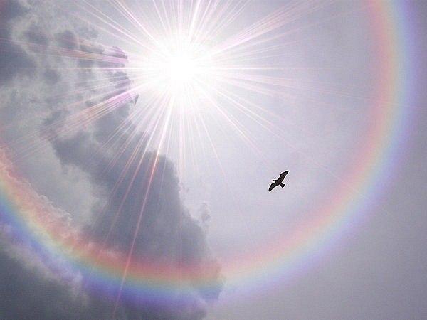 Пташка у небі з райдугою. Свобода!