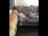 Собака тоже хочет обнимашек