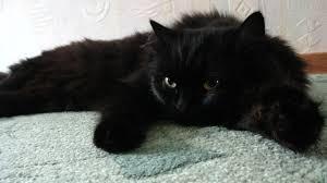 Котики Мыш - не первый мой кот. До него был рыжий кот Жора, который сдавался вместе с квартирой, где я тогда жила со своим мч Жора был пи**анутый на всю голову Теперь я, конечно, понимаю, что он