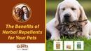 Преимущества растительных репеллентов для домашних животных / Benefits of Herbal Pest Repellents for Your Pets