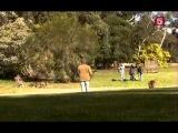 BBC Мир природы Вездесущие кенгуру