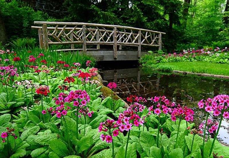 Цветы многолетники для клумб фото