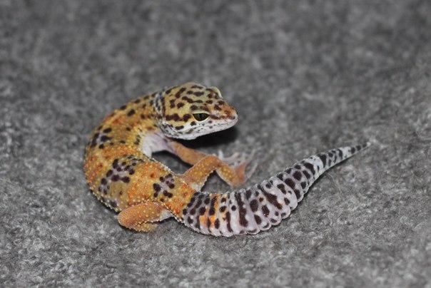 Различные рептилии YDoVJfHTkyo
