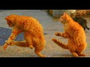 """The Waltzing Cat ""by Leroy Anderson"