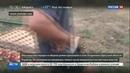 Новости на Россия 24 • За убийство девочки одесситы всю ночь громили дома цыган