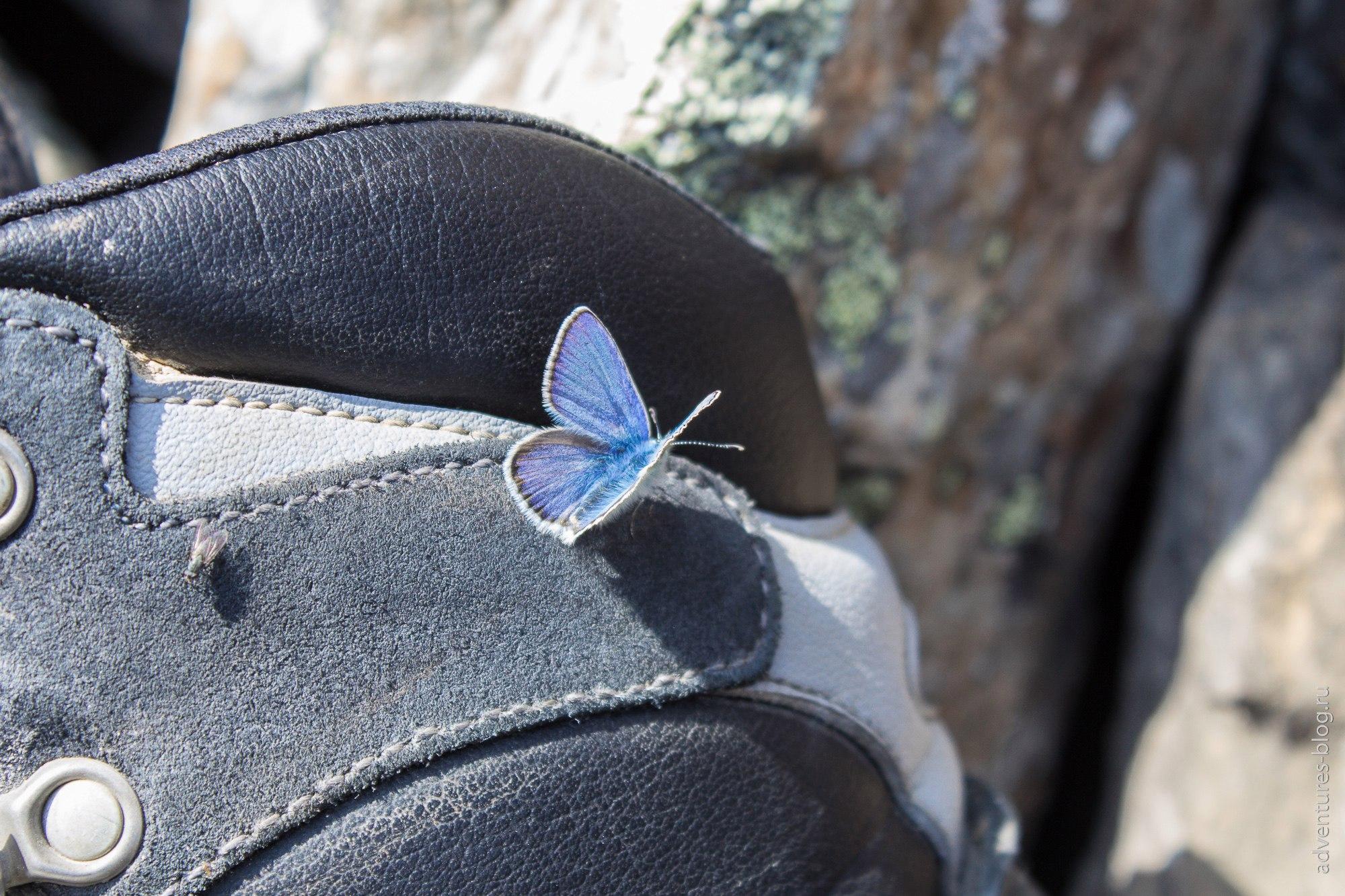 Бабочка на ботинке scarpa manta