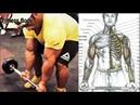 9 Ejercicios para Bíceps Grandes, Será Cierto, Biceps Workout