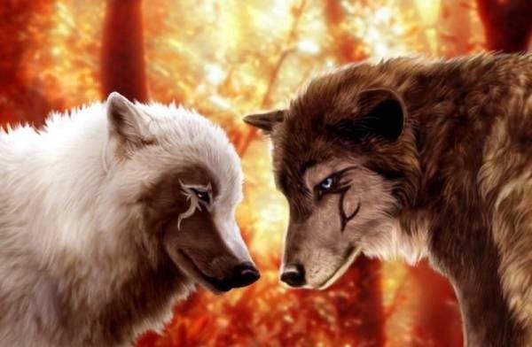 Волк уже не хищник влюблённый волк уже