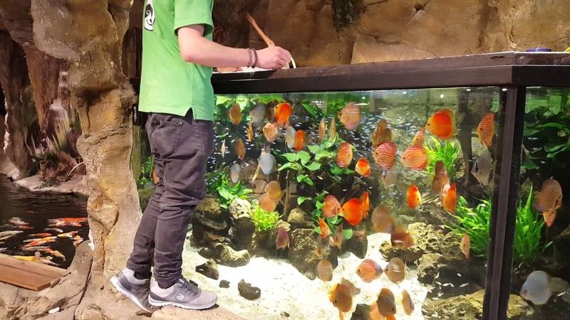 Fütterung Kölle Zoo München 8000 Liter mit unseren STENDKER-Diskusfisch