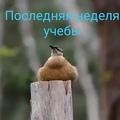 eco_vika video