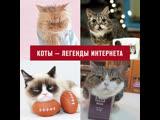 Самые знаменитые котики Интернета