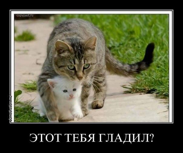 http://cs14113.vk.me/c540100/v540100343/baab/Jh-VTMnR2vM.jpg