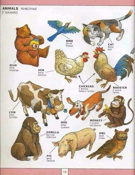инфограффика животные на английском языке