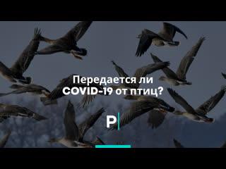 Передается ли COVID-19 от птиц?