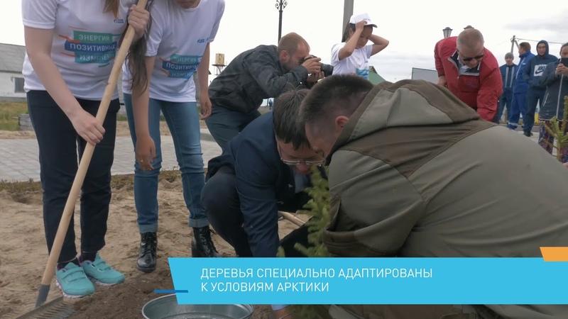 В центре села Новый Порт высадили еловую аллею