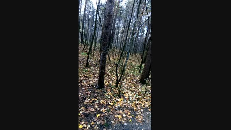 Белкин лес