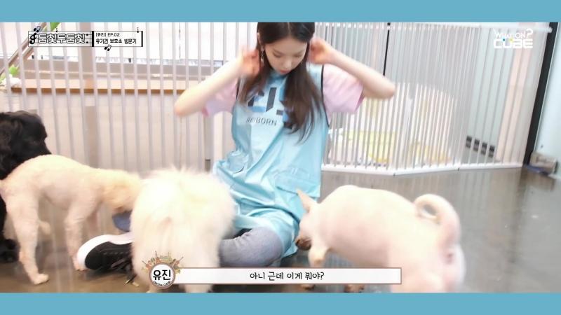 CLC - 둠칯두둠칯 [유진] EP.02 유기견 보호소 방문기