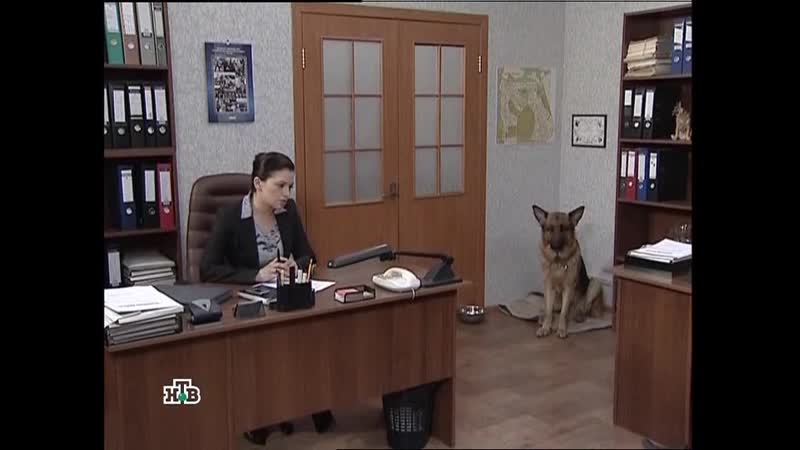Возвращение Мухтара -2. 5 сезон 91 серия