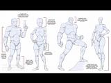 Основы рисунка фигуры: Пропорции