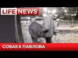 Убийцу четверых человек в Москве вычислила собака