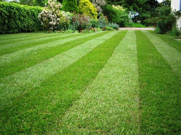 Как и чем удобрять газон