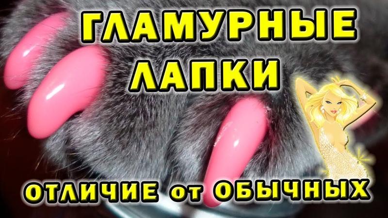 Гламурные антицарапки для кошек 😻 Переплата за бренд?