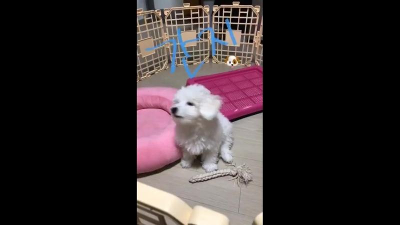 Daehyun's puppy Kanji