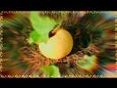 Юмор - короткие смешные видео - Humor - lustige Videos