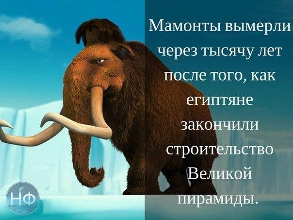 https://pp.vk.me/c7005/v7005235/660da/tOitcycyNb8.jpg