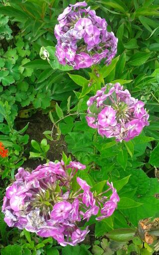 Цветы у Ликки DfQKZzsc6Ww