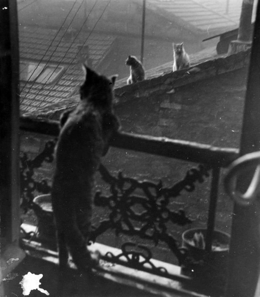 А мсье Vasile выйдет погулять Фото: Édouard Boubat1948г