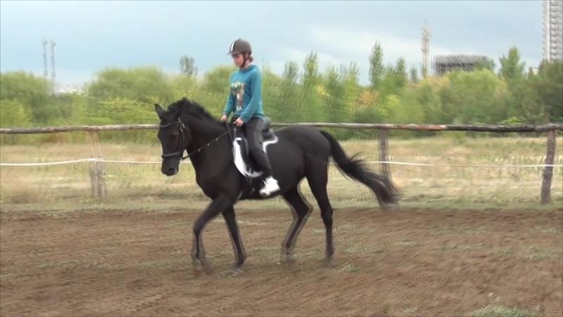 Mustangs_notes | Мария и Гайден