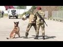 Служебные собаки Росгвардии задерживают террористов