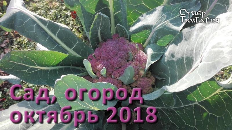 Сад и огород в конце октября 2018. Эко поместье в Болгарии