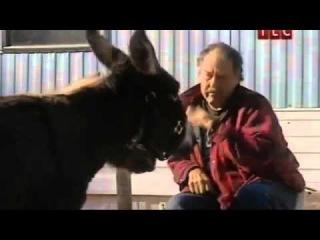 знакомства с животными видео