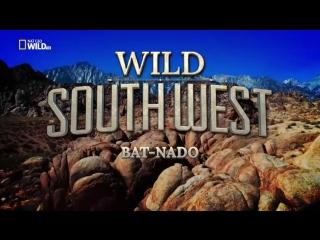 Прекрасная Америка: Дикий Юго-Запад. Мышиное царство Bat-Nado / Wild Southwest. Bat-Nado (2018)