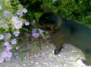 The butterfly the bee and the cat Philemon who helped shoot this video