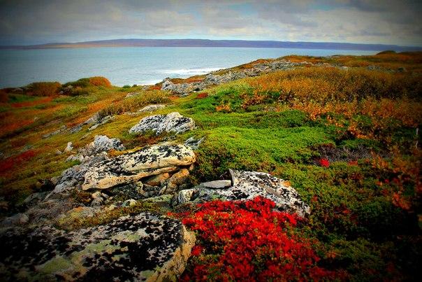 Осенняя тундра.Кольский полуостров